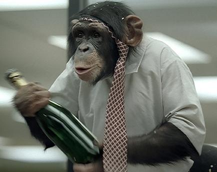 chimpance borracho